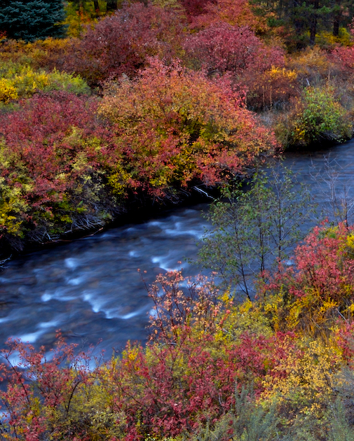 Autumn color along the banks of Shevlin Park's Tumalo Creek