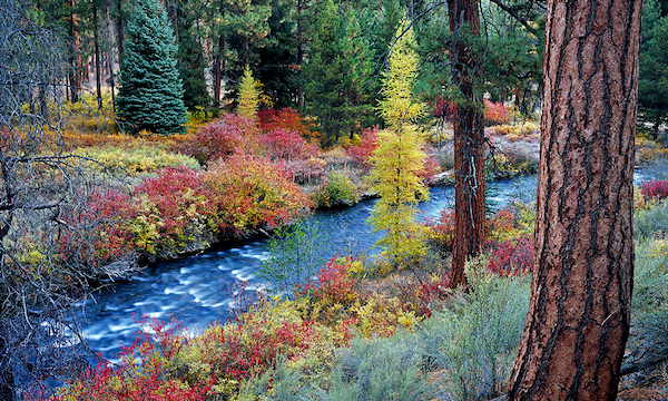 Bend Oregon Fall photography review.