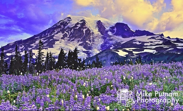 New Mt Rainier National Park Fine Art Photograph!