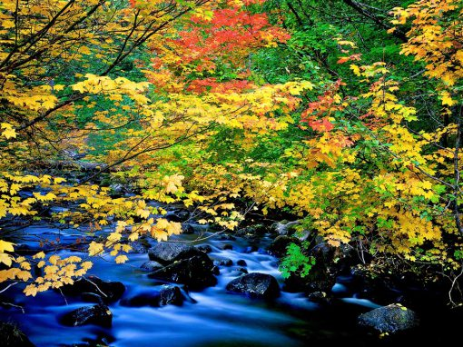 Fall color on Oregon's North Santiam River,oregon water