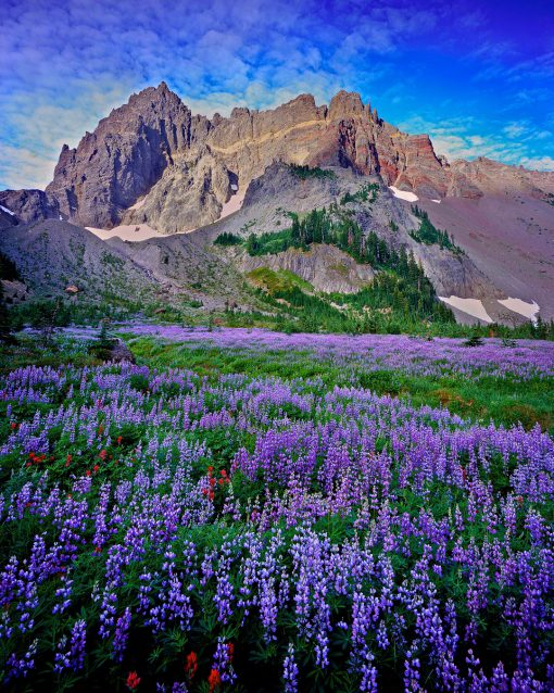 Canyon Creek Meadow, three fingered jack, ,wildflower meadow,sisters oregon,, sisters oregon,hikes, hiking