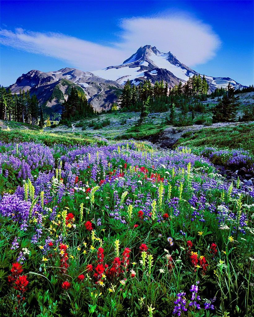 mt jefferson,oregon wilderness,wildflowers,mountains,fine art photo