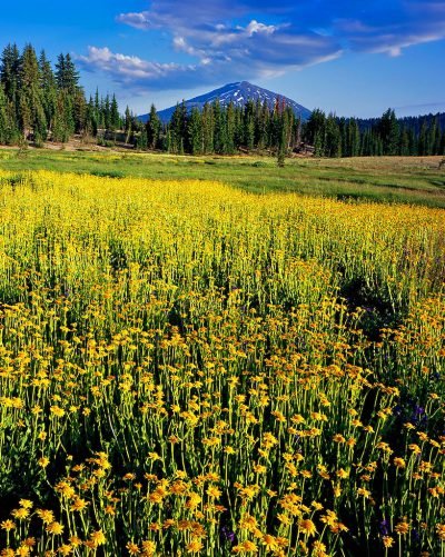 Golden Meadow, Mt. Bachelor