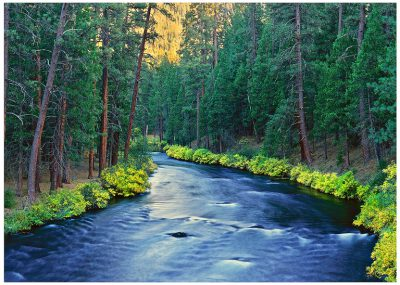 Metolius Golden Greeting Card