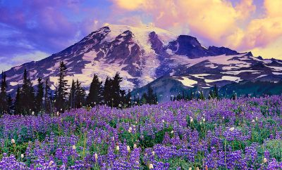 Mt.-Rainier-National-Park