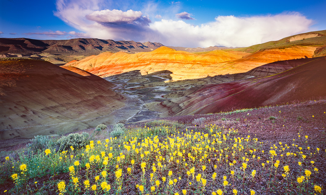 John Day Painted Hills Superbloom!