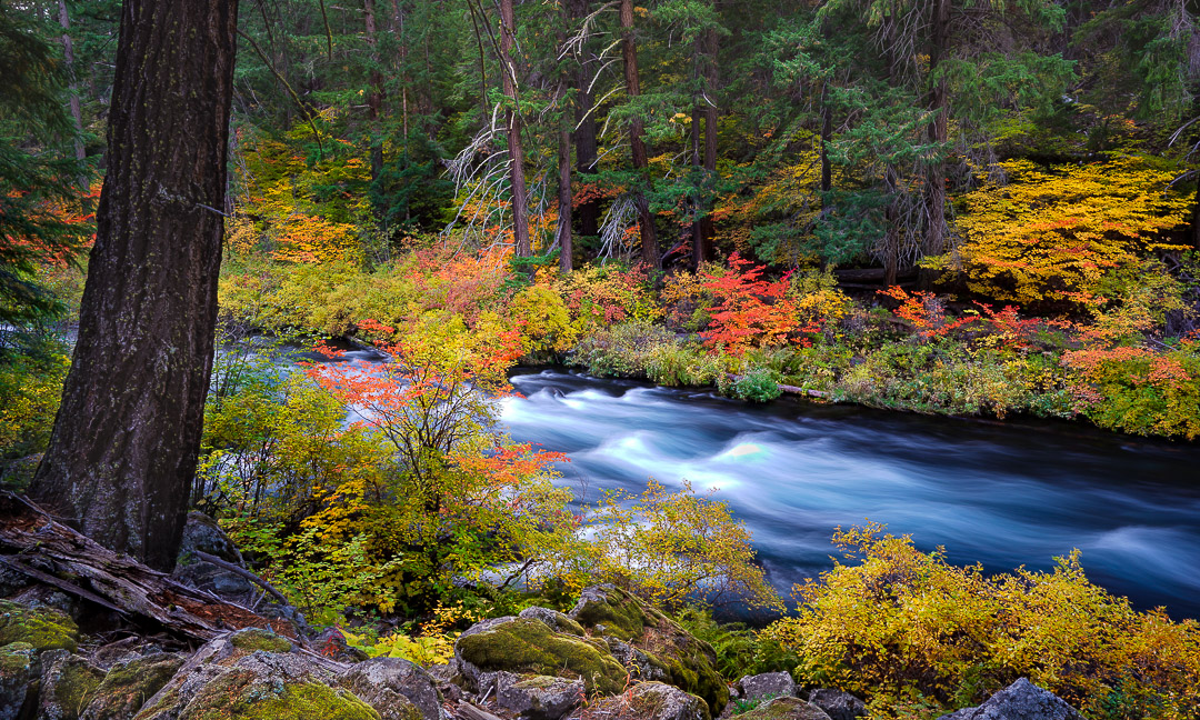 """Autumn Rush"", Metolius River,, Central Oregon."