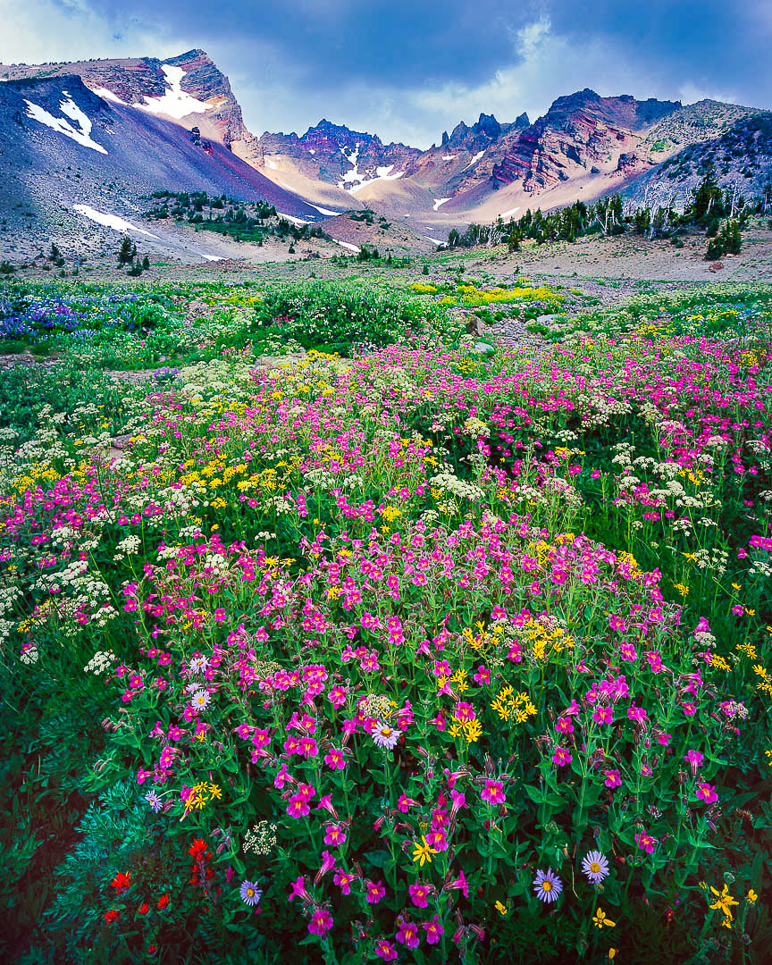 """Broken Top Eruption"" Alpine Wildflowers Explode on Broken Top Mountain"
