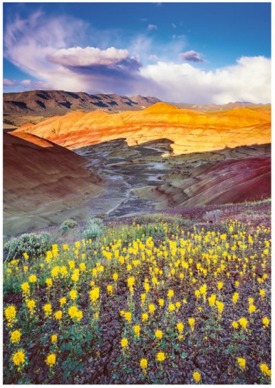 Painted Hills Greeting Cards/ Note Cards