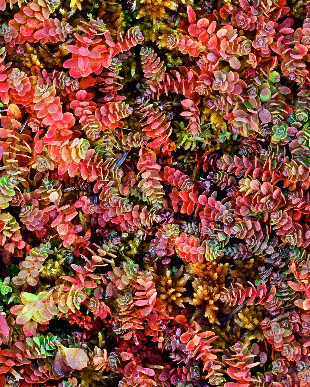 """Autumn Ground Cover"""