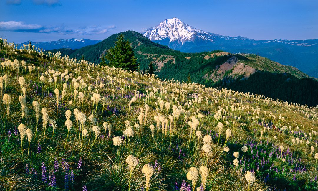 Oregon Beargrass, Mt. Jefferson