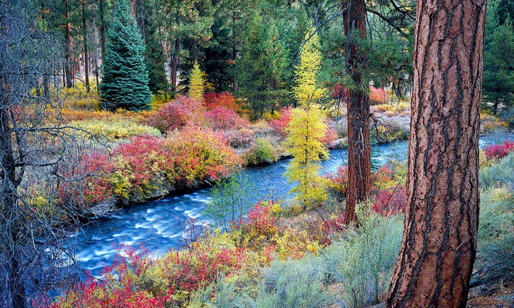 Shevlin Park, Tumalo Creek, and Fall Color