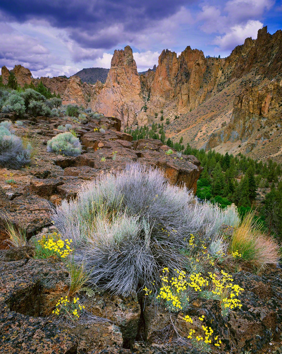 """Smith Rock Basalt Columns"""