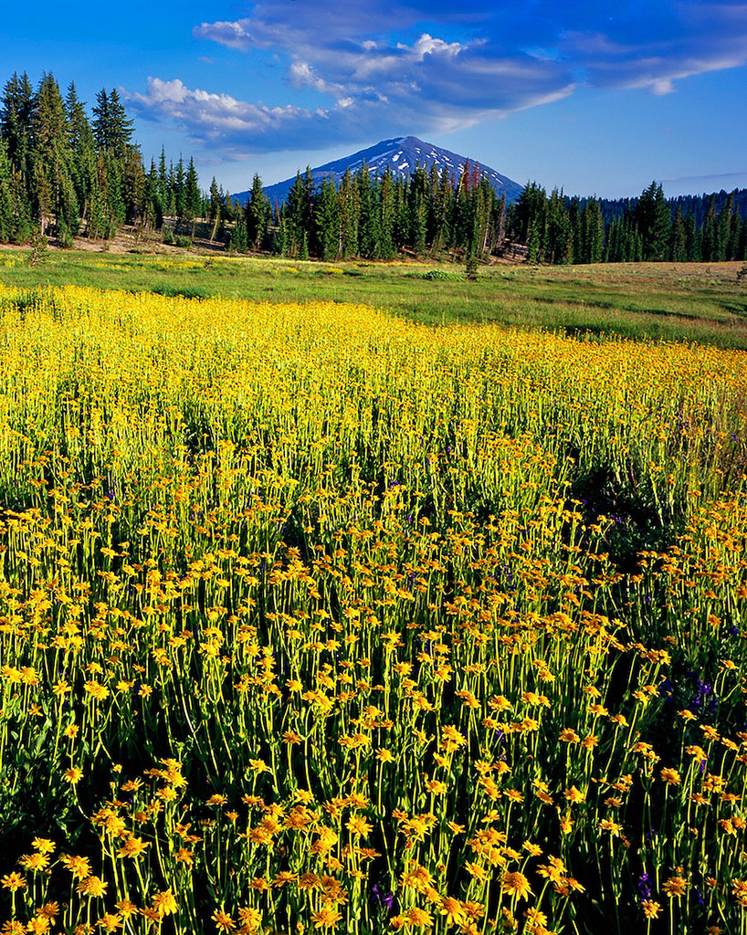 """Golden Meadow"", Mt. Bachelor"