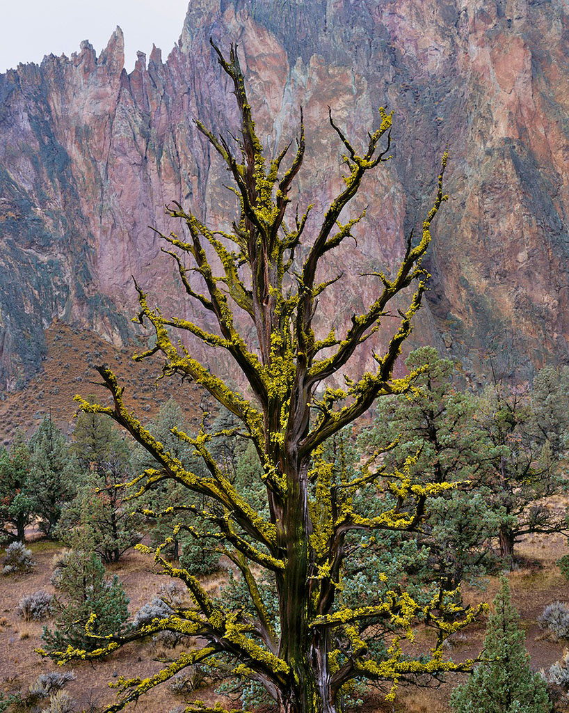 """Juniper Snag, Smith Rock"""
