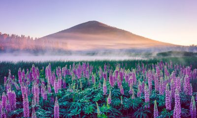 Black Butte Morning fine art print