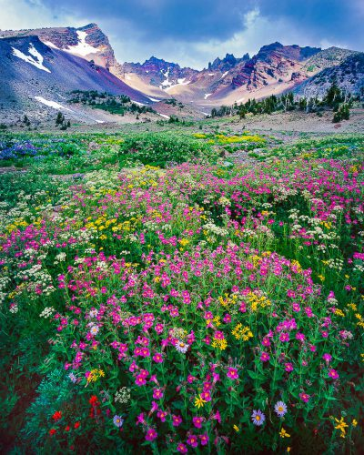 Broken Top Mountain, alpine wildflowers,Oregon wildflowers