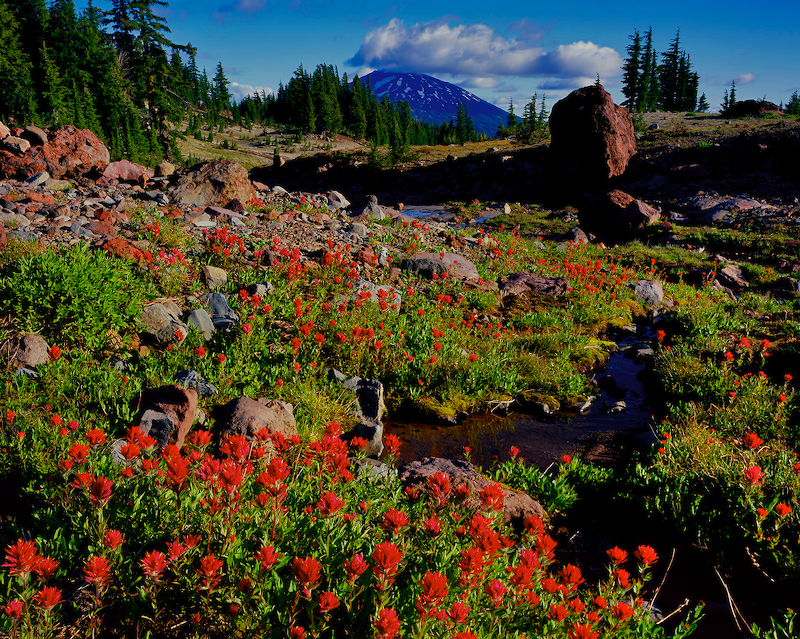 Mt. Bachelor and Indian Paintbrush