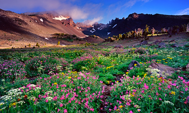 Sunrise on Central Oregon's Broken Top Mountain with a wildflower filled foreground.