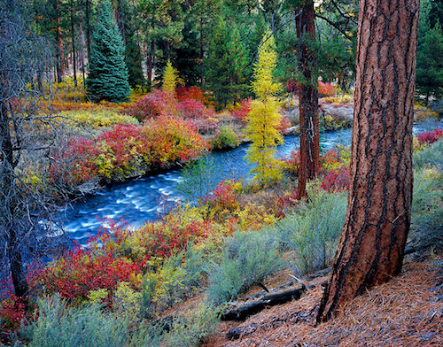 Bend, Oregon's Shevlin Park