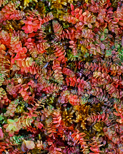autumn-groundcover-004