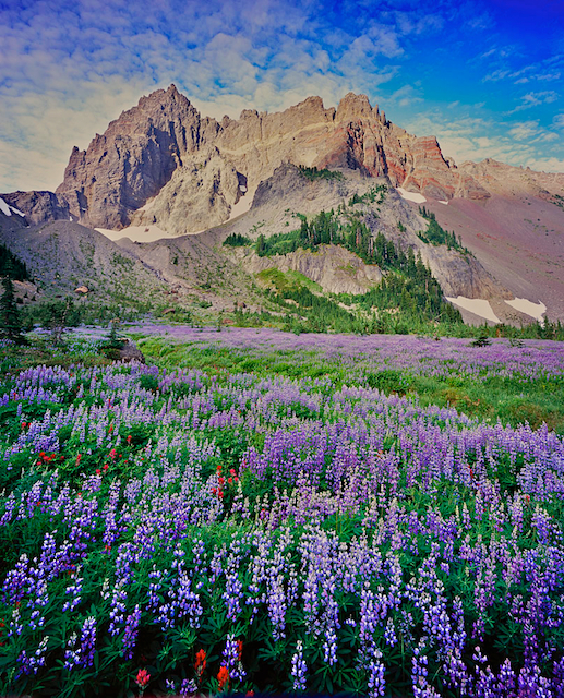 Picture of Canyon Creek Meadow and Three Fingered Jack in the Oregon Cascades
