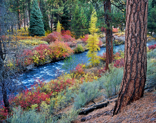 Bend, Oregon , Shevlin Park