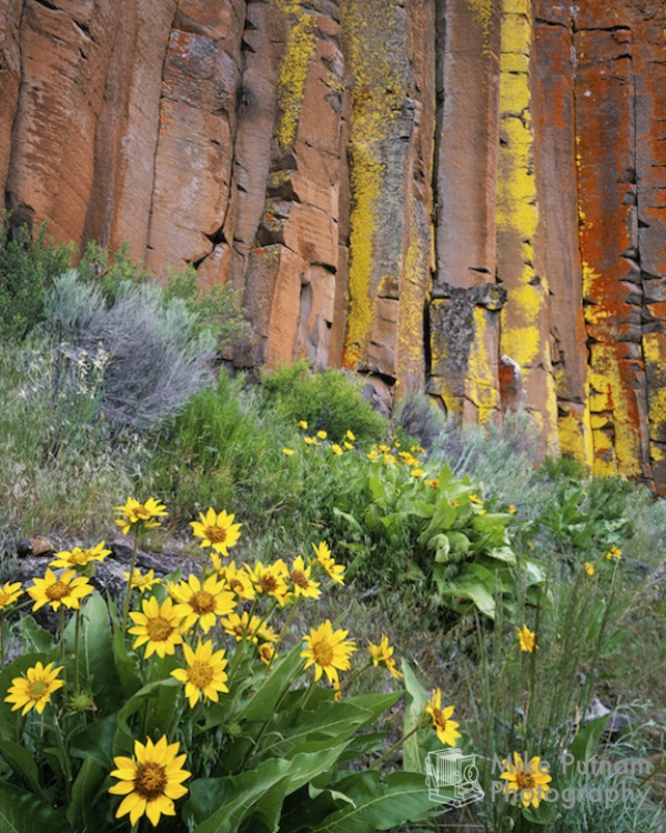 Balsamroot and Basalt Columns