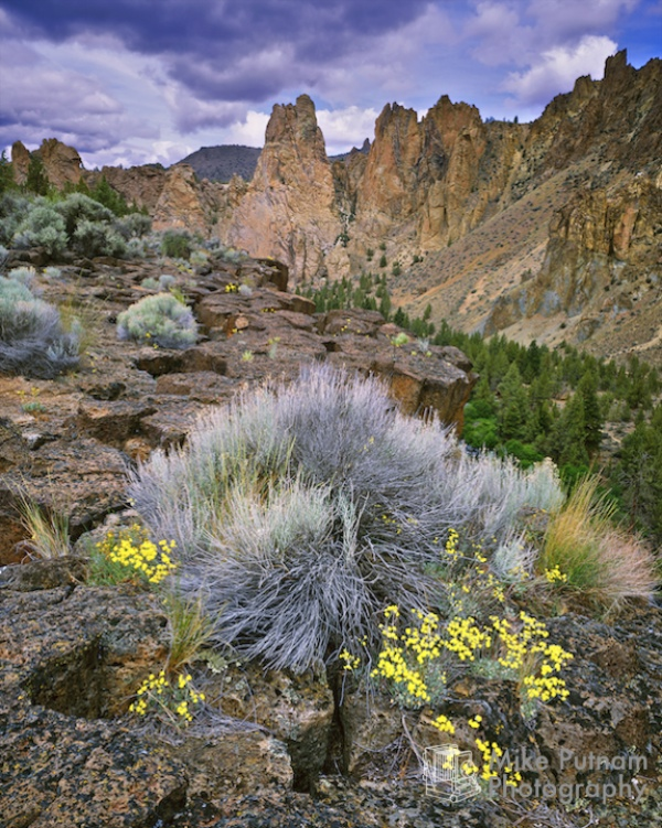 Smith Rock Wildflowers