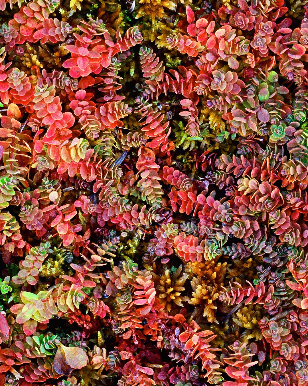 autumn ground cover, deschutes national forest