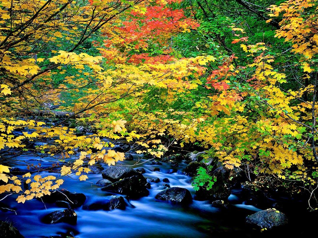 Fall color on Oregon's North Santiam River,oregon water