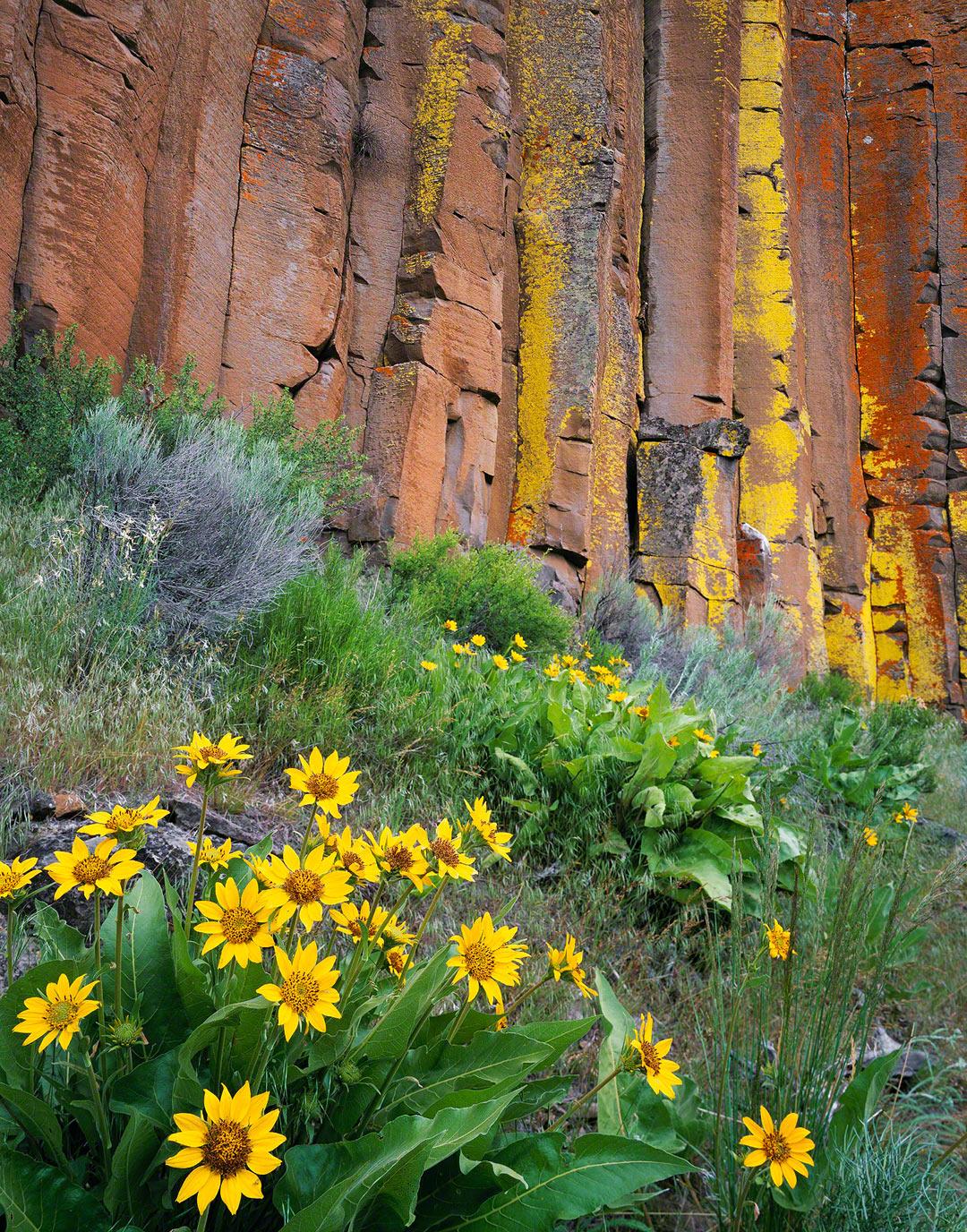 sisters oregon,basalt columns,lichen,blasamroot