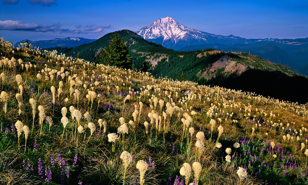 mt jefferson ,beargrass,oregon wildflowers,lupines