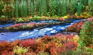 oregon water, river,fall color,deschutes river trail,riparian,bend oregon hiking,bend oregon hiking