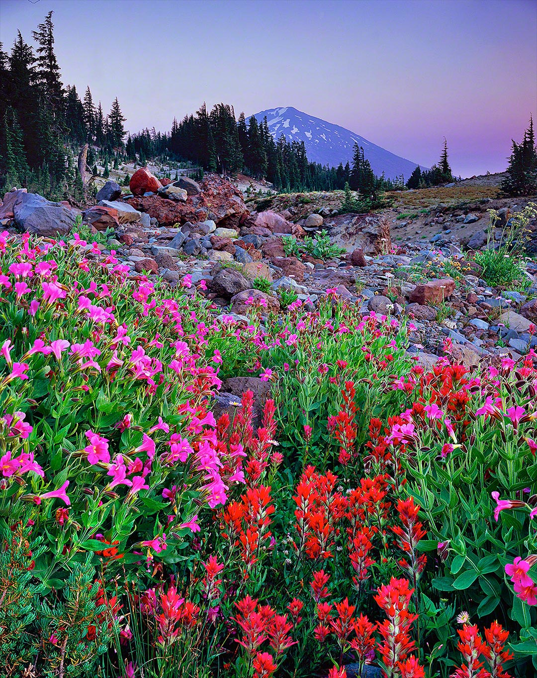 mt bachelor,wildflowers,monkeyflower,indian paintbrush