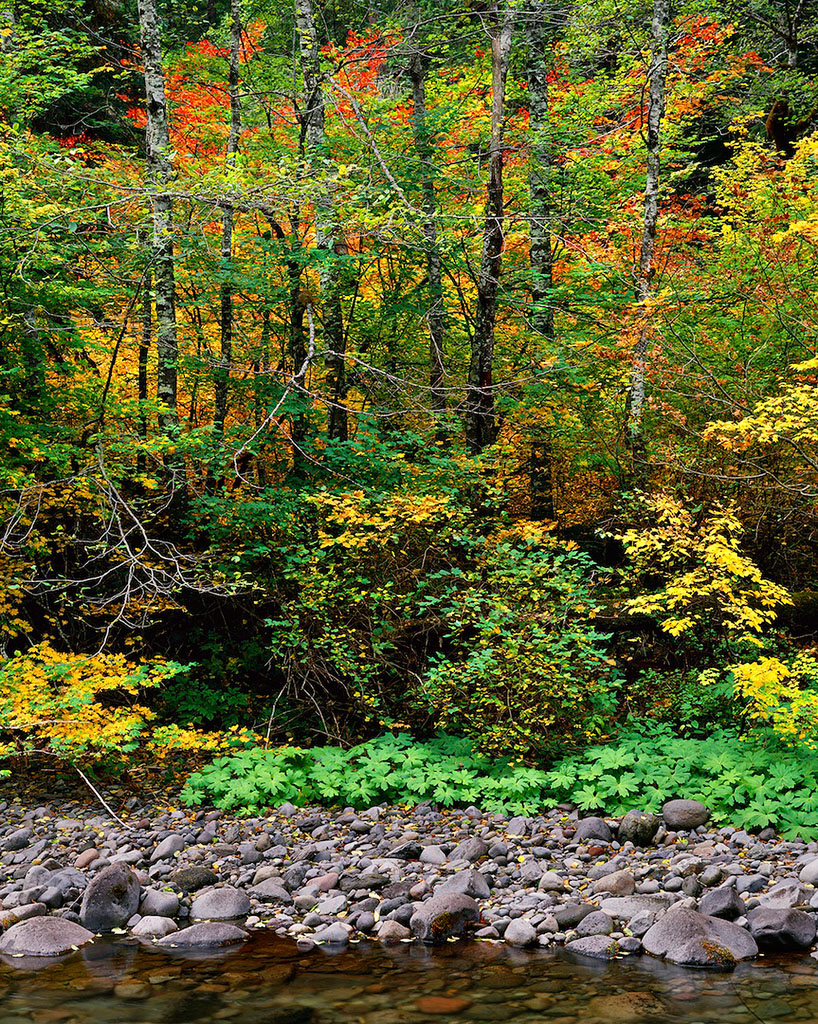 Autumn Patterns , North Santiam River