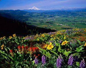 Mt Hood, Hood River Valley
