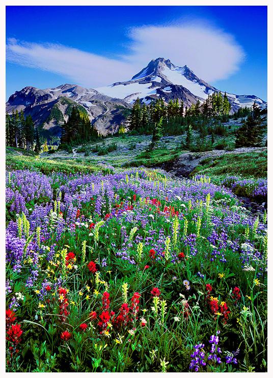 Mt. Jefferson Wilderness Greeting Card