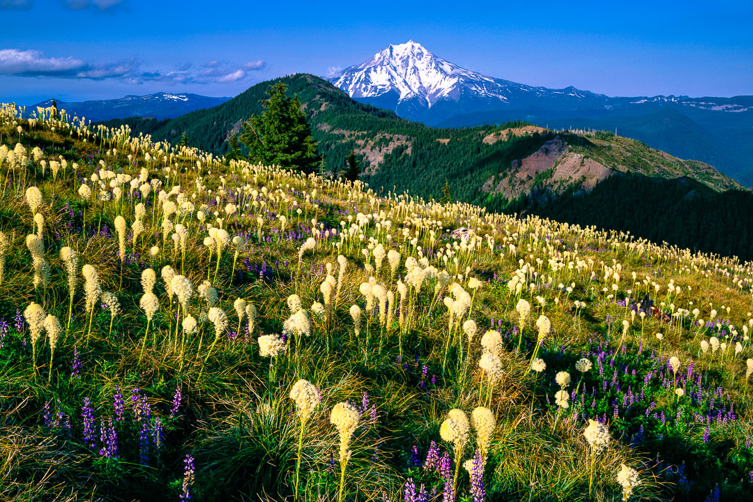 Beargrass Blooms,Mt Jefferson,Oregon Cascades