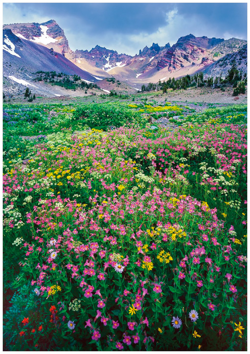 Broken Top Greeting Cards/Note Cards, Oregon greeting cards,note cards, Oregon mountains,wildflowers