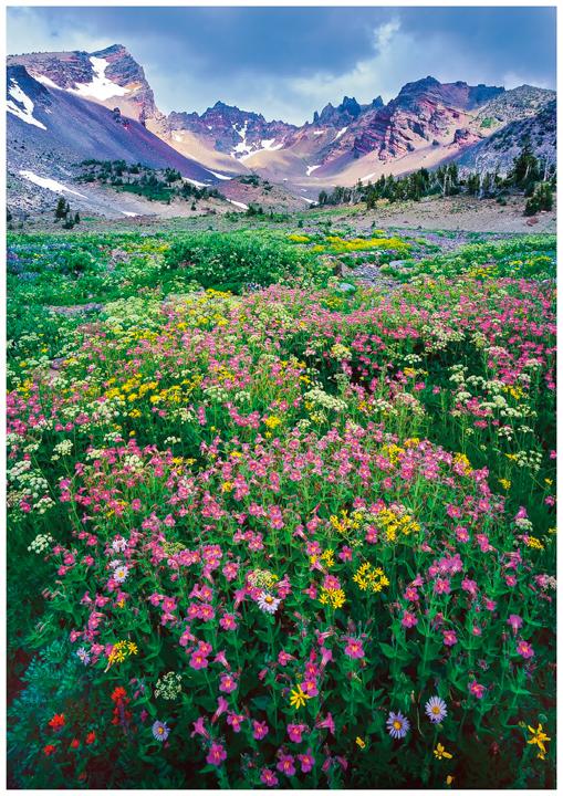 Broken Top Greeting Cards/Note Cards, Oregon greeting cards,note cards, Oregon mountains,wildflowers