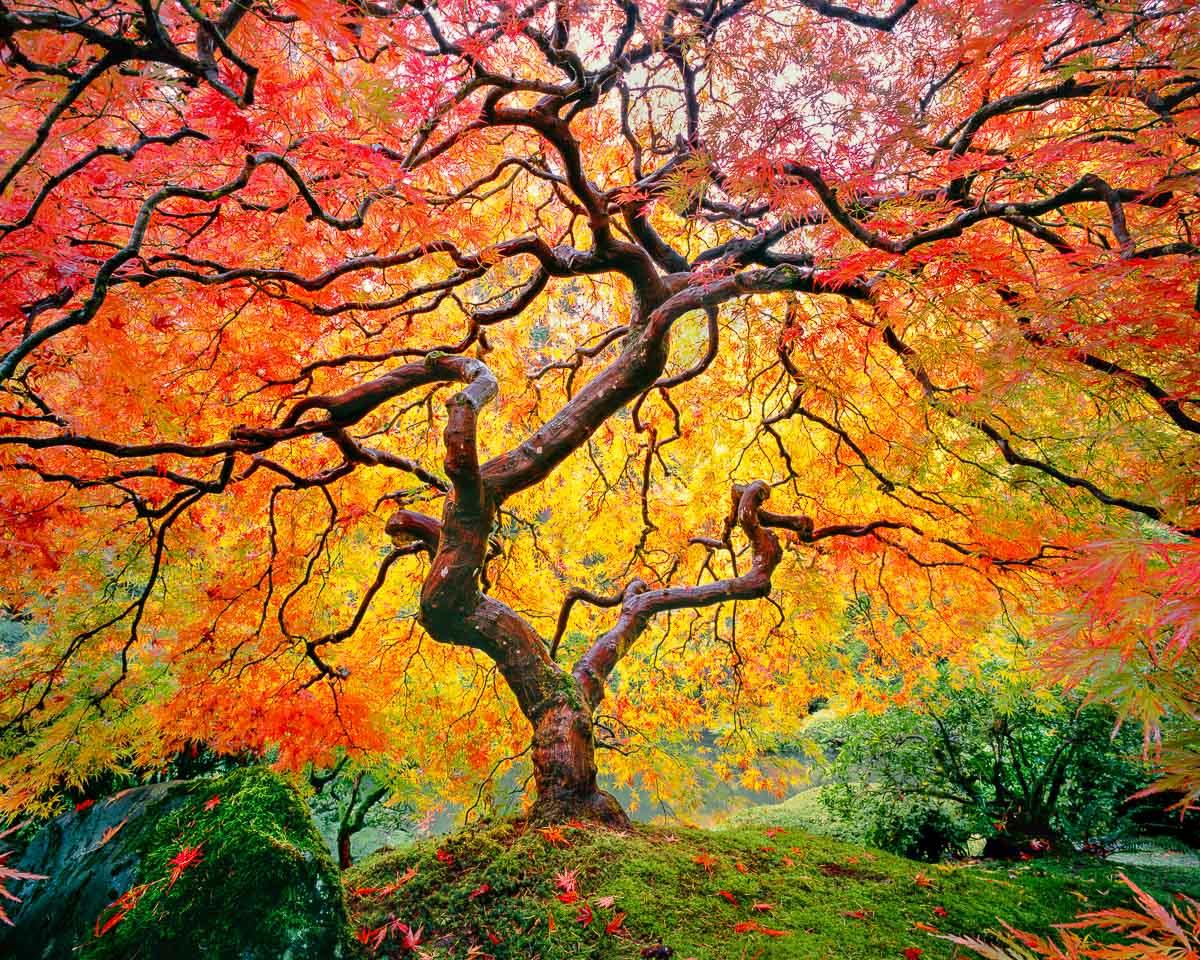 Zen Flame, Portland Japanese Garden