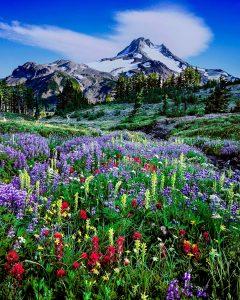 Mt. Jefferson Wilderness, Oregon mountains, Oregon wildflowers, Oregon Landscape photographer