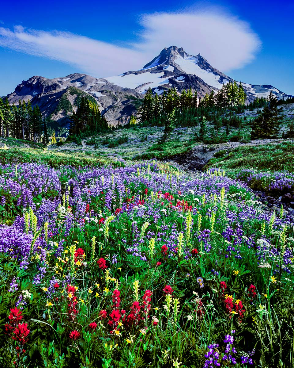Mt. Jefferson Wilderness, Oregon mountains, Oregon wildflowers, Oregon Landscape photographer