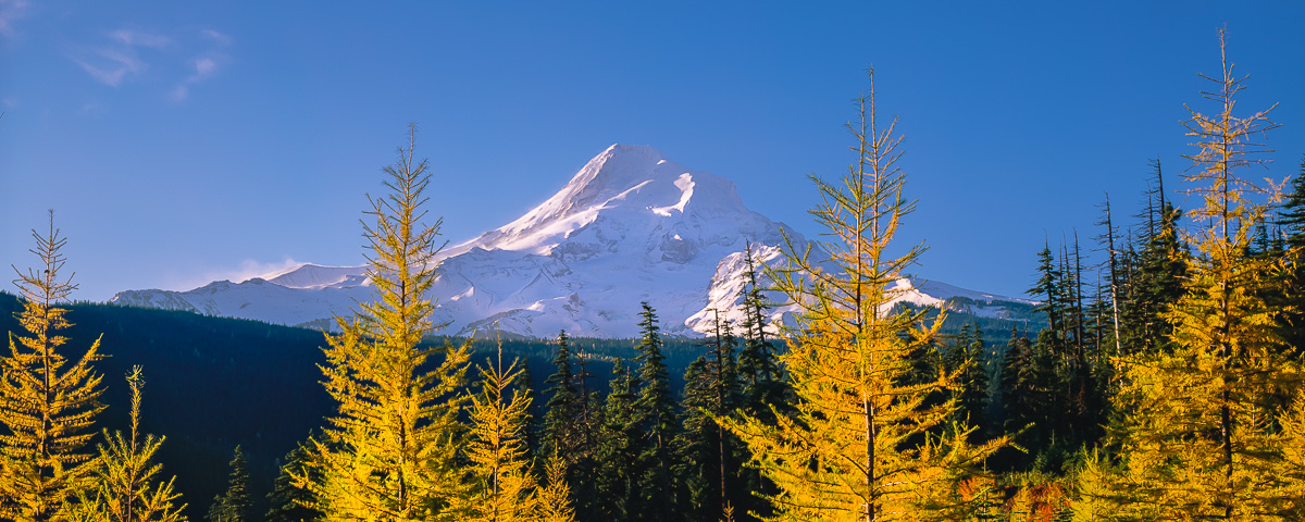 Mt. Hood Larch Trees Panorama Fine Art Print