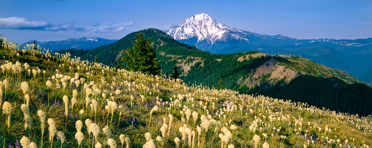 Beargrass Bloom Panorama Fine Art Print Mt. Jefferson, Oregon