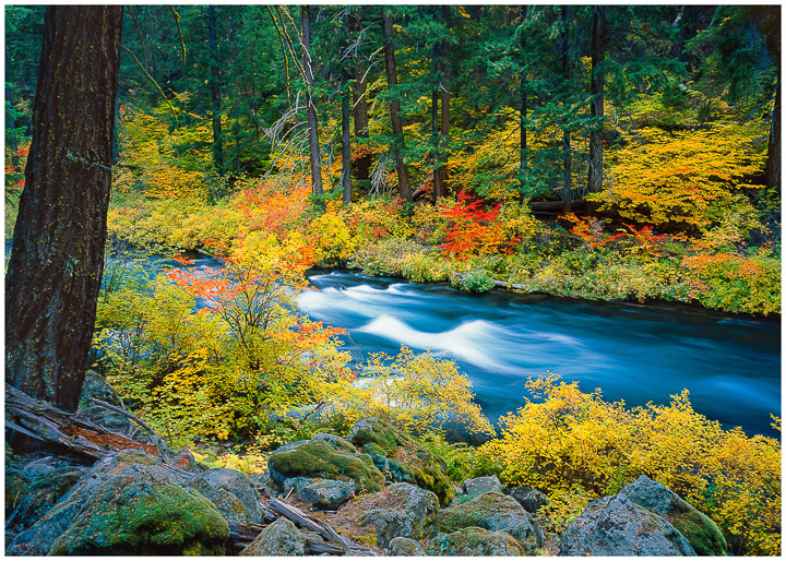Metolius River Greeting Card
