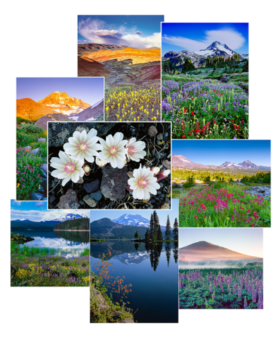 Oregon Wildflowers Greeting Cards