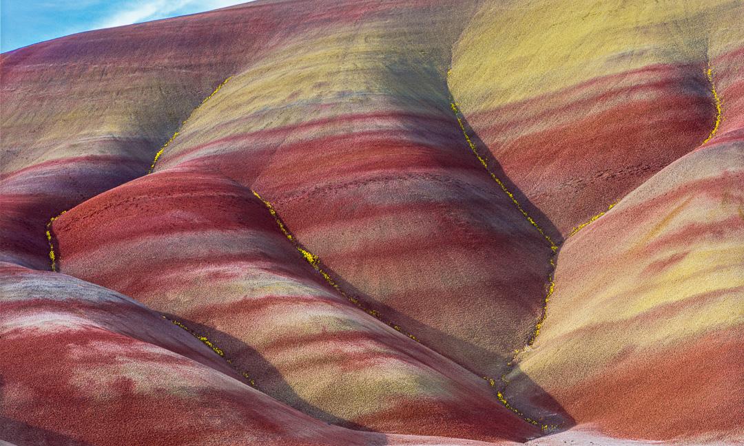 John Day Wildflowers, Painted Hills,,fine art print,Oregon Landscape photos
