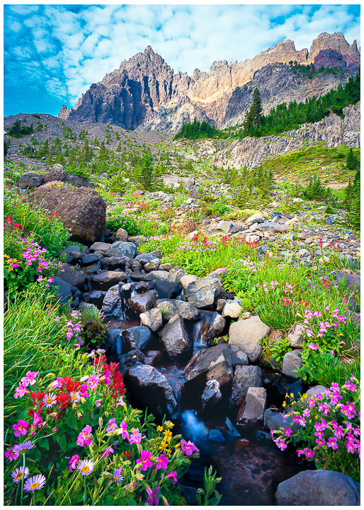 Three Fingered Jack Greeting Card note card